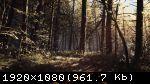 Blair Witch (2019) (RePack от xatab) PC